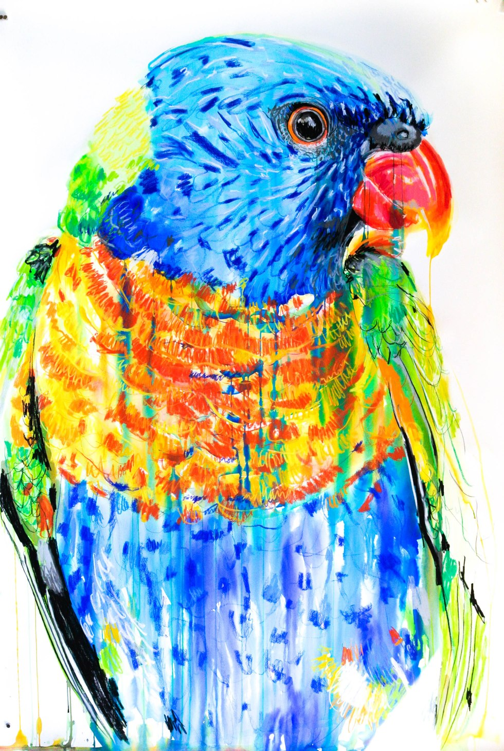 Potter_Rainbow Lorikeet_114by150_Aug15.highres