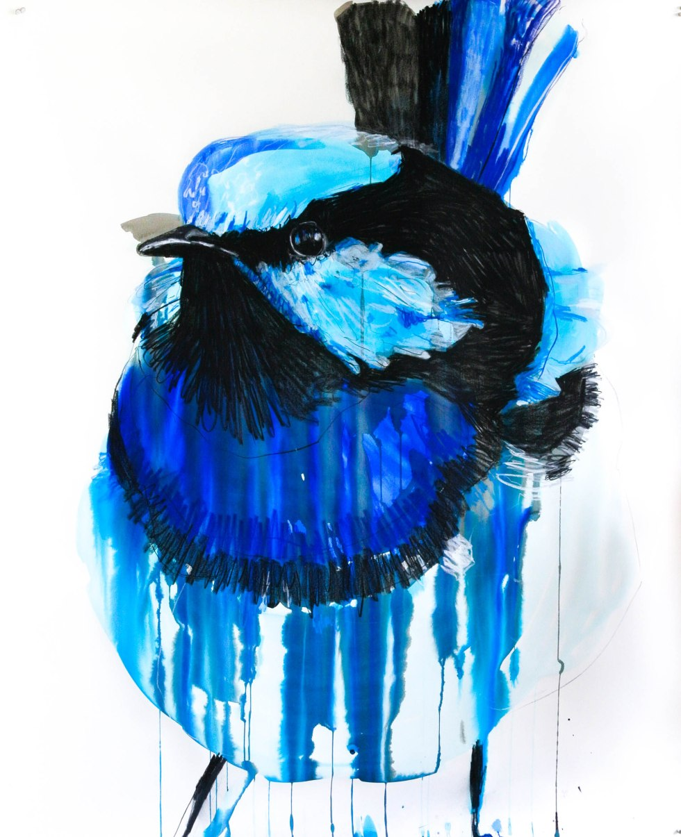 Potter_Superb Fairywren_114by140_2Sep15.highres